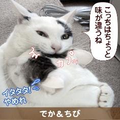 080805_touko