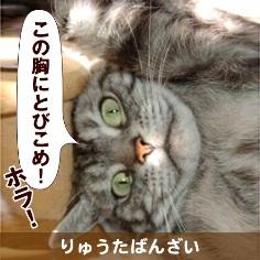 080810_touko