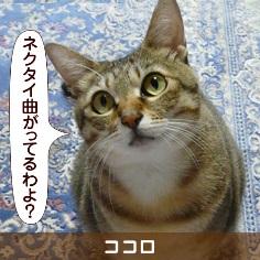 080815_touko