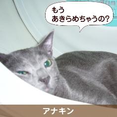 080816_touko