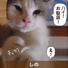 080818_touko