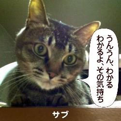 091206_touko